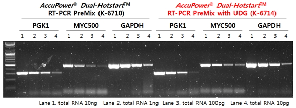 AccuPower Dual-Hotstart™ RT-PCR(with UDG) PreMix