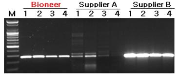 AccuPower GoldHotstart Taq PCR PreMix