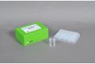 AccuPower® Plus DualStar™ qPCR PreMix, Exicycler™ (96 T, 50 μl)