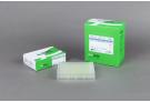 AccuPower® RocketScript™ RT PreMix, RNase H Minus (96 T, 20 μl)
