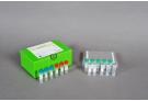 AccuPower® HCV Quantitative RT-PCR Kit