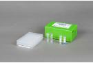 AccuPower® ETEC-Pili 5-Plex PCR Kit