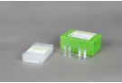 AccuPower® Bacterial Poultry 3-Plex PCR Kit