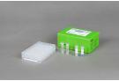 AccuPower® Porcine Respiratory 4-Plex PCR Kit