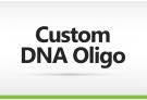 DNA Oligomer Order