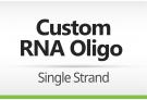 RNA Oligomer Order – Single Strand